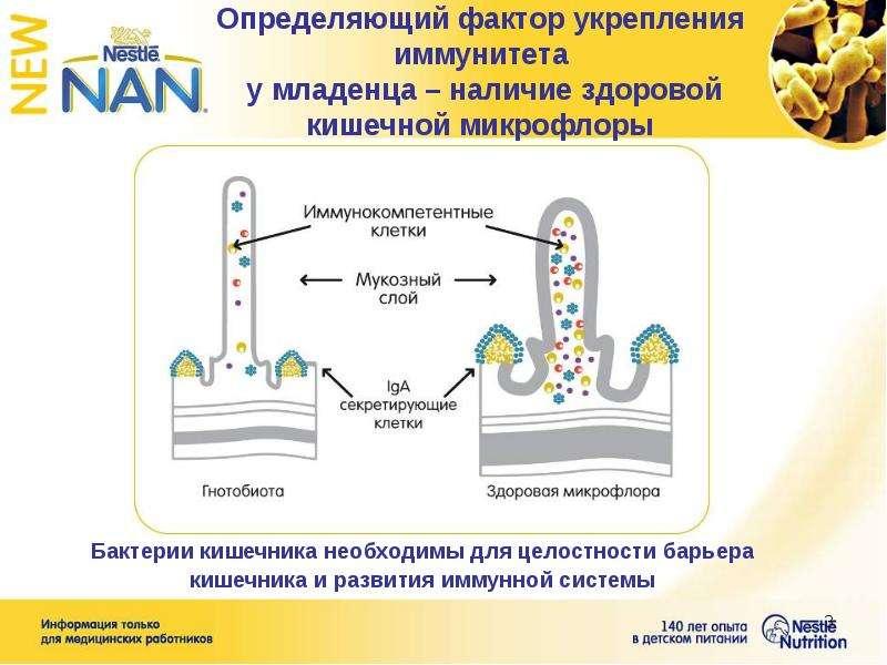 Определяющий фактор укрепления иммунитета у младенца – наличие здоровой кишечной микрофлоры