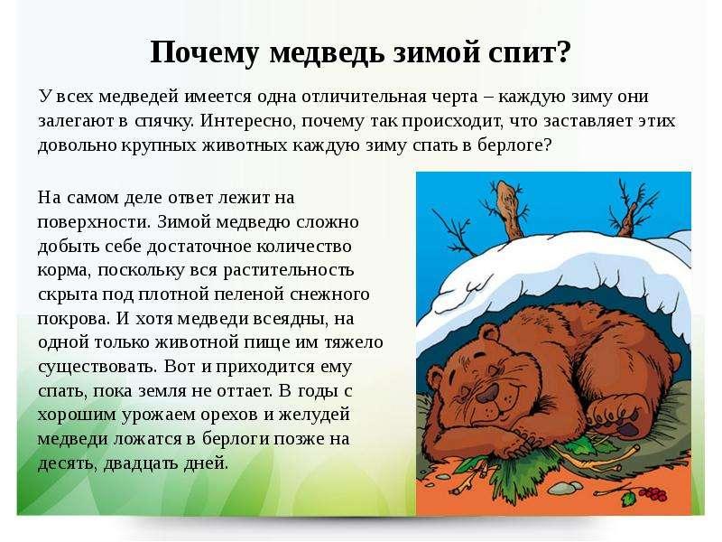 Песня почему медведь зимой спит без слов