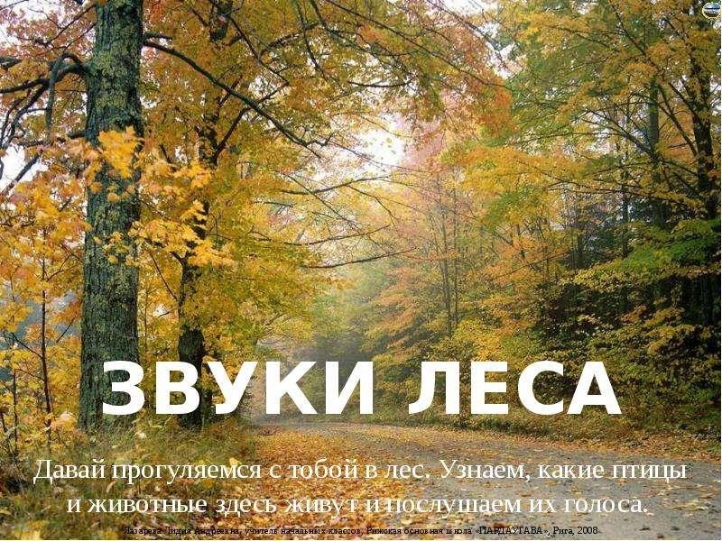 Звуки лес скачать