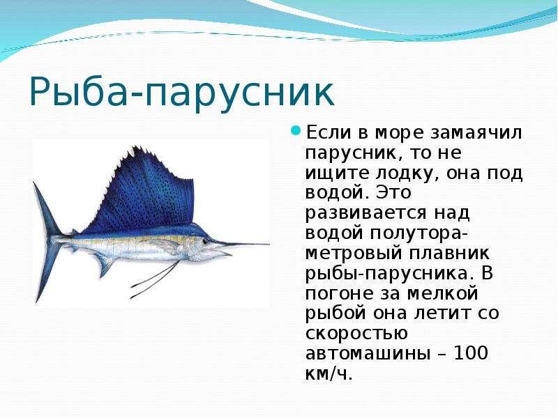 несмотря название, как нарисовать рыбу парусник зависимости времени года