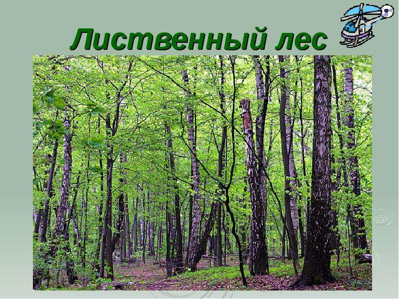лиственный лес картинки для презентации ясный