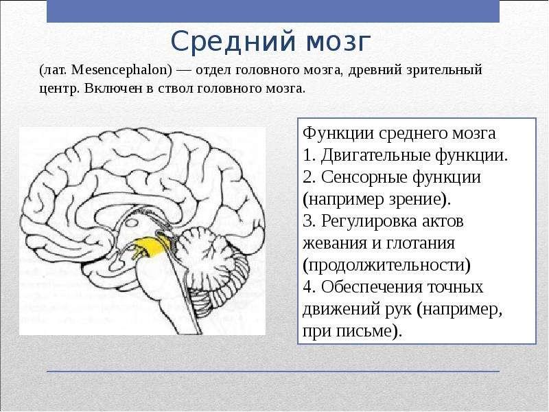 Опухоли головного мозга: изменения со стороны сосудистой, дыхательной систем и мышц