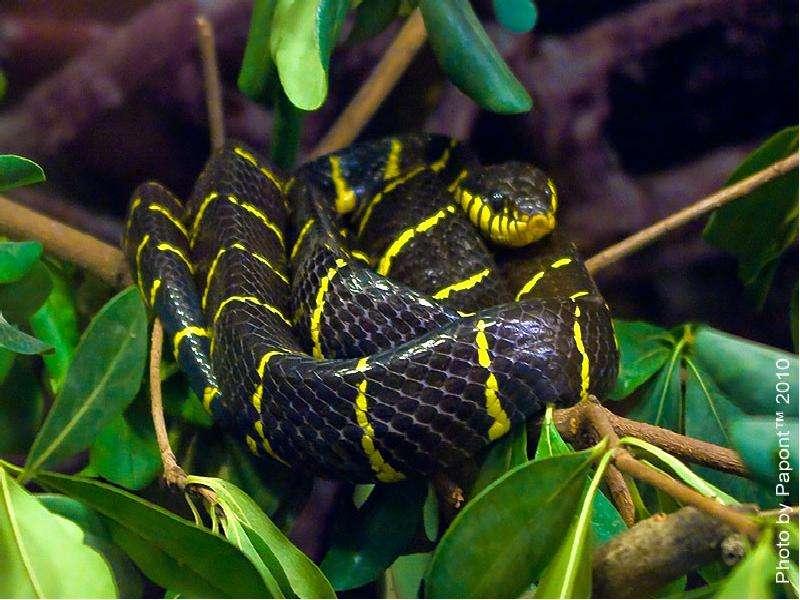 змея полоз фото в приморье нас, делаете правильный