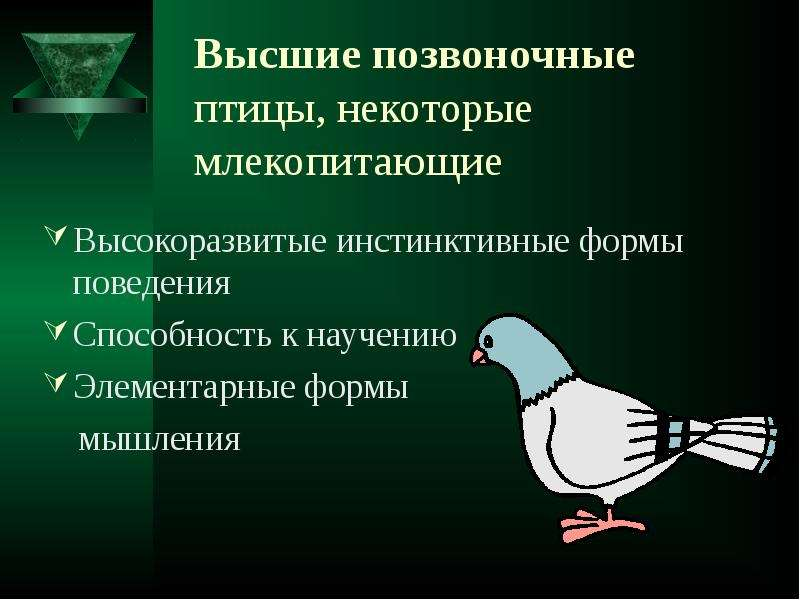 Высшие позвоночные птицы, некоторые млекопитающие Высокоразвитые инстинктивные формы поведения Спосо