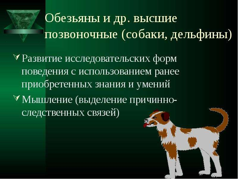 Обезьяны и др. высшие позвоночные (собаки, дельфины) Развитие исследовательских форм поведения с исп