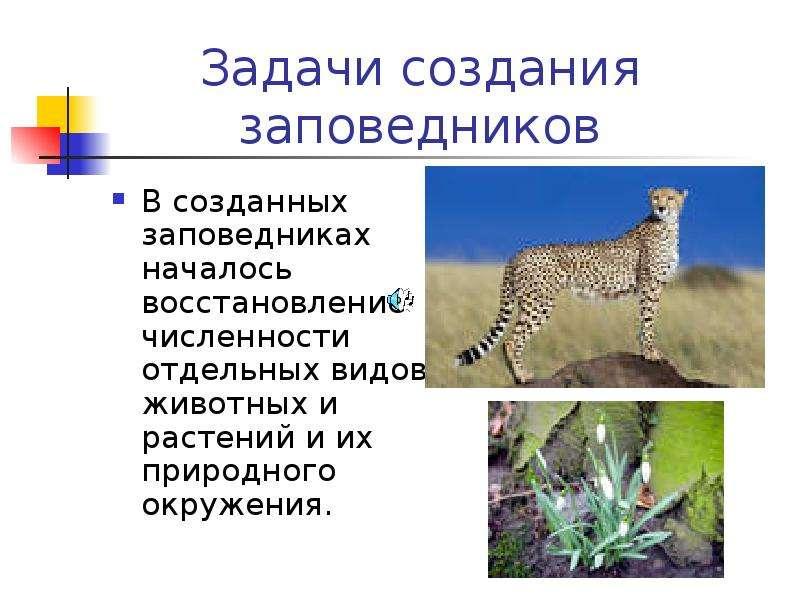 Презентация На Тему Национальные Парки России 4 Класс Окружающий Мир