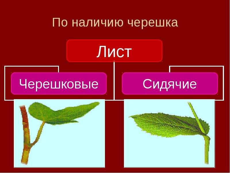foto-tatuirovki-eroticheskogo-soderzhaniya