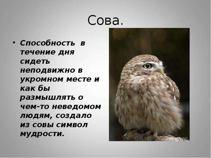 поздравление мудрость сова самых красивых