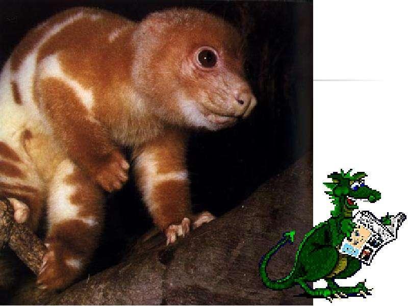 На тему Животные Австралии., слайд 9