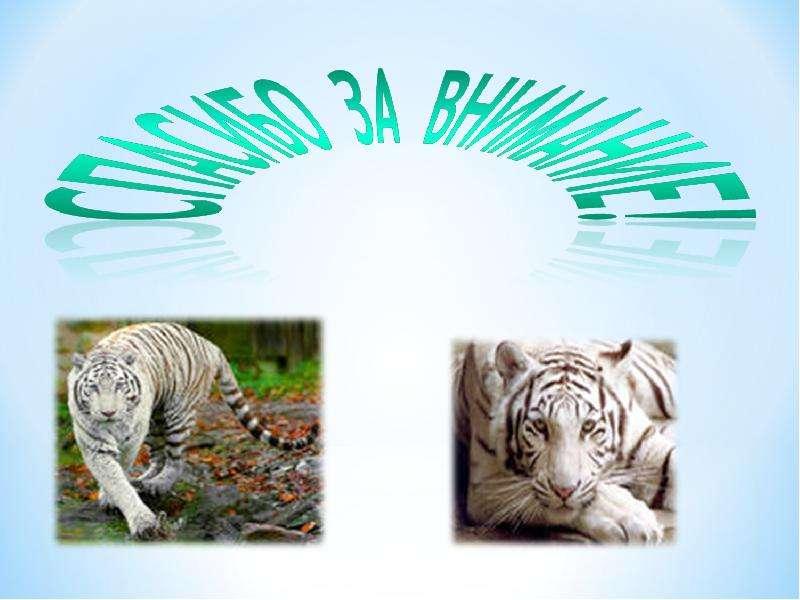 Амурский тигр, слайд 9