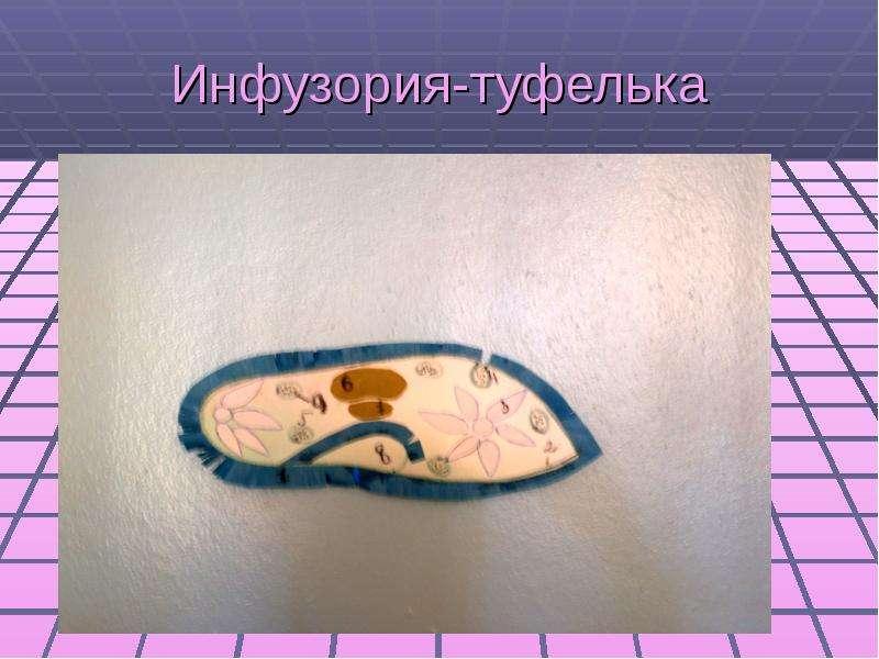 Инфузория туфелька из пластилина фото