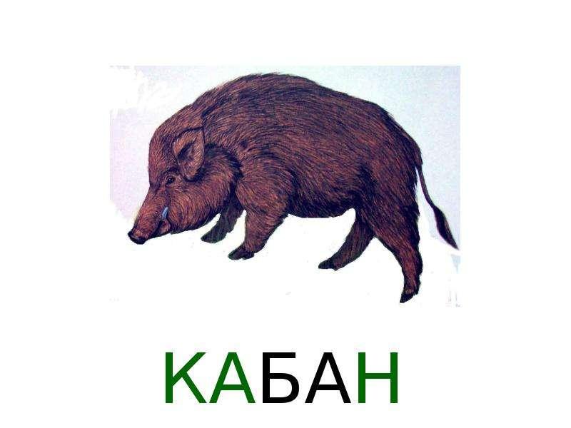 Лиса медведь кабан рисунки