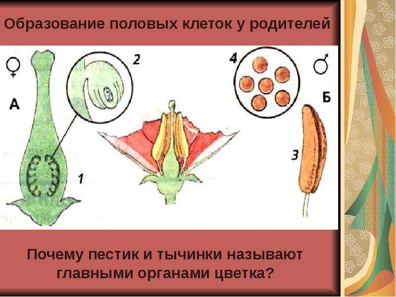 devushka-prikrilas-rukoy