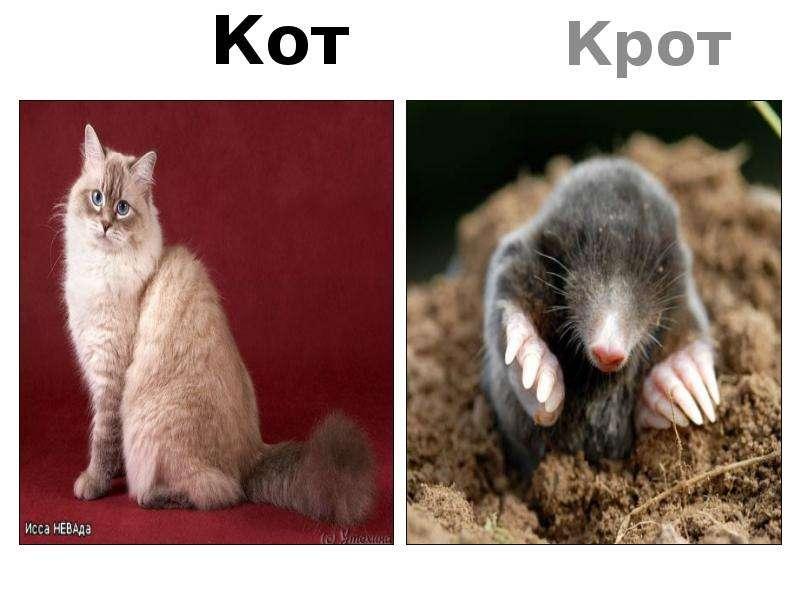 коты которые ловят кротов