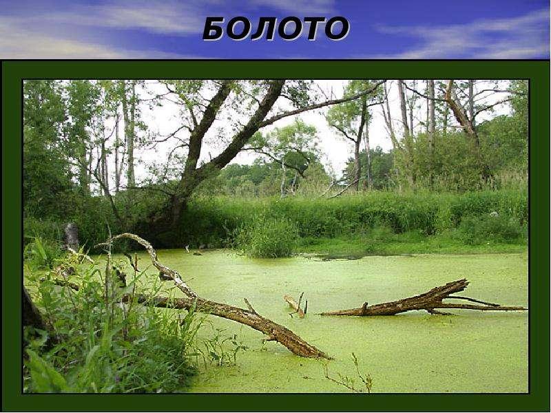 моховое болото там мох камыши голые сосна-гх2
