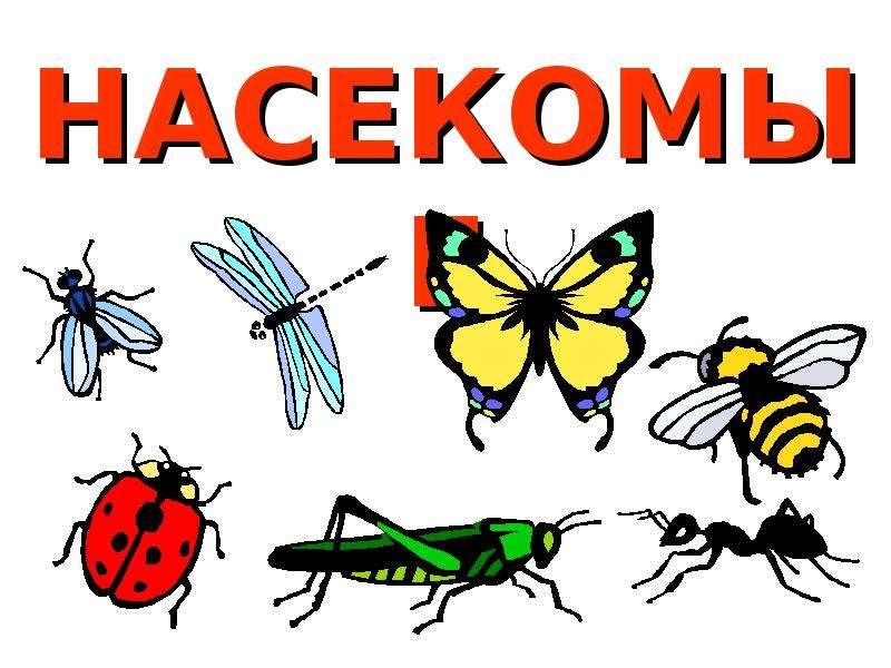 делом картинки для презентации по теме насекомые студия