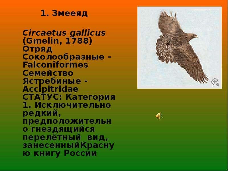 Красная книга саратовской области растения скачать