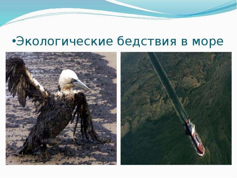 Экологические бедствия в море