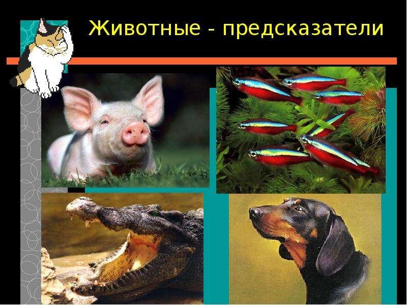 Володина Елена Николаевна МБОУ «Нововолковская ООШ» Московская область, слайд 10