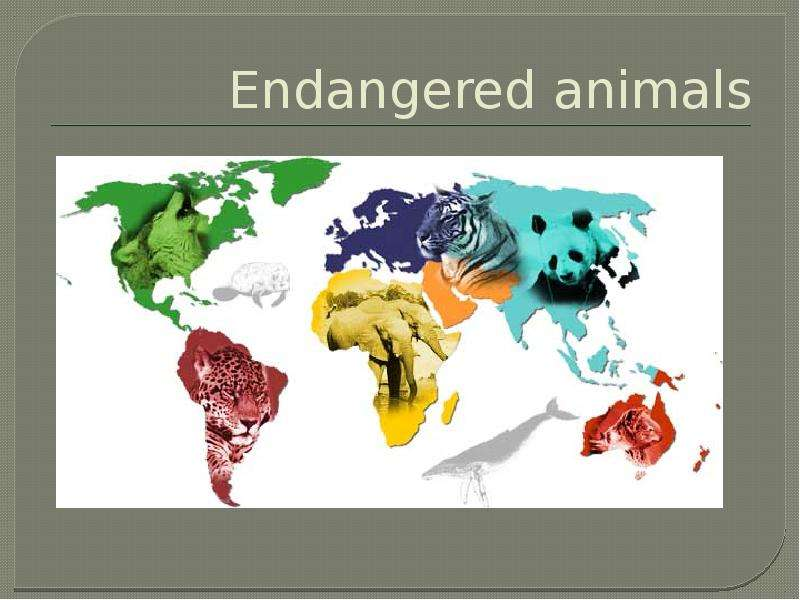humans should not engage in animal Humans have been deceiving themselves for thousands of years that they're smarter than the rest of the animal kingdom, despite growing evidence to the contrary animals offer different kinds of intelligences which have been under-rated due to humans' fixation on language and technology.