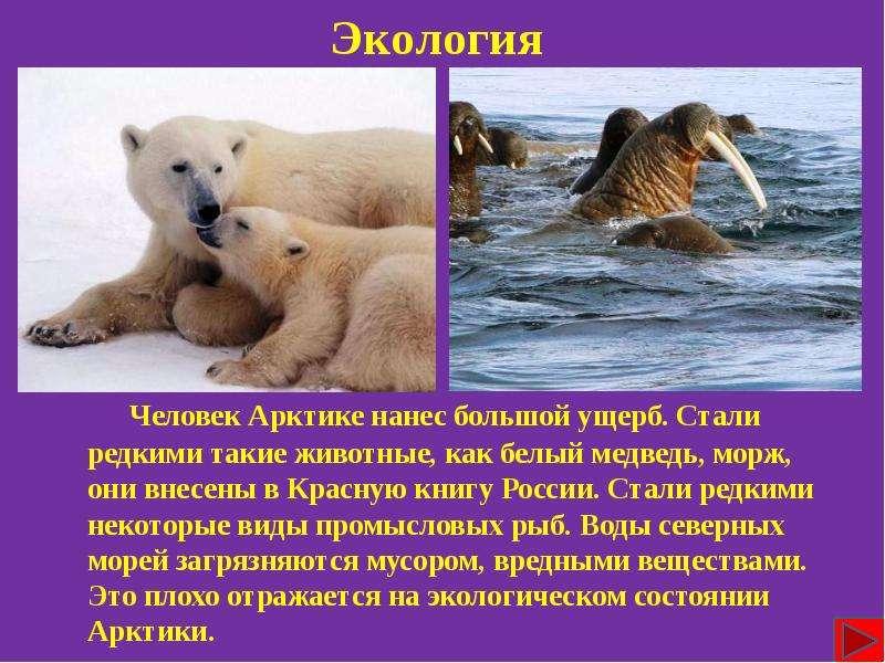 Цепочка загадок о животных саванны