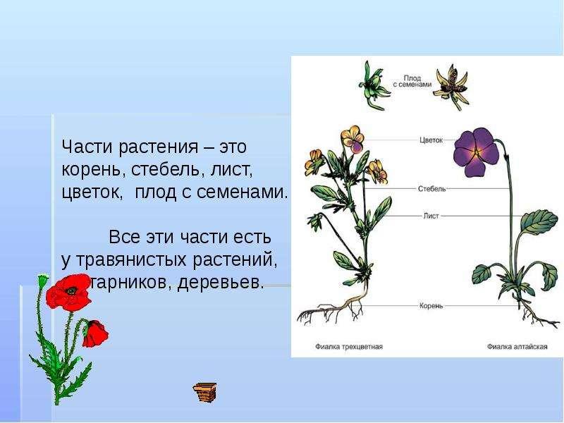 купить растения это понятие для детей всей России