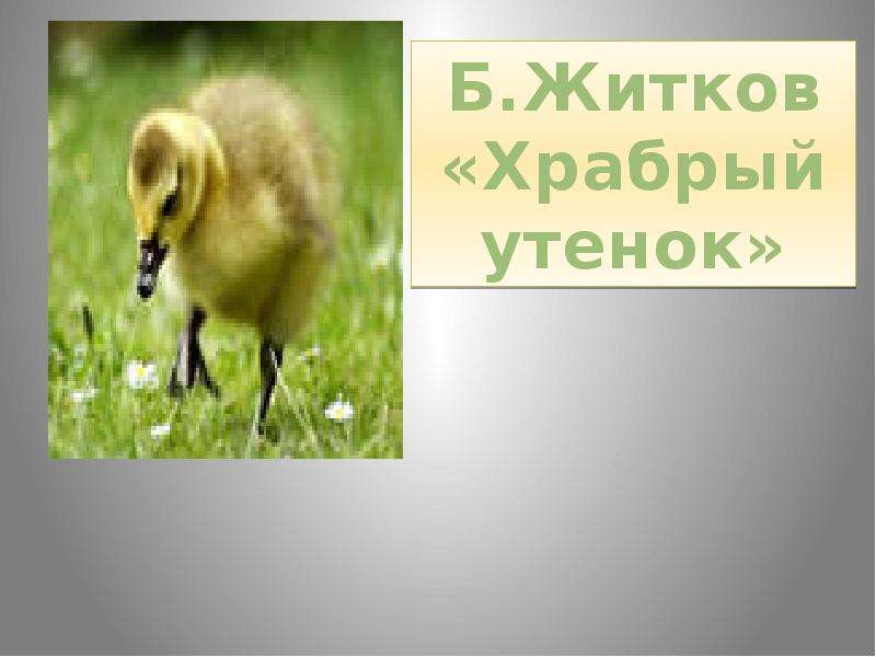 На тему Б. Житков «Храбрый утёнок», слайд 8