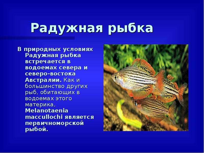 Радужная рыбка В природных условиях Радужная рыбка встречается в водоемах севера и северо-востока Ав