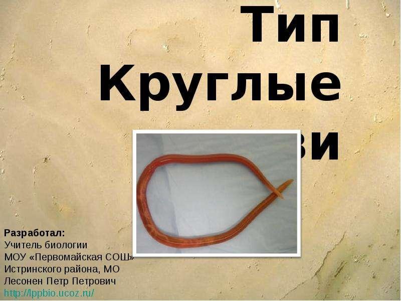 Презентация На тему Тип Круглые черви