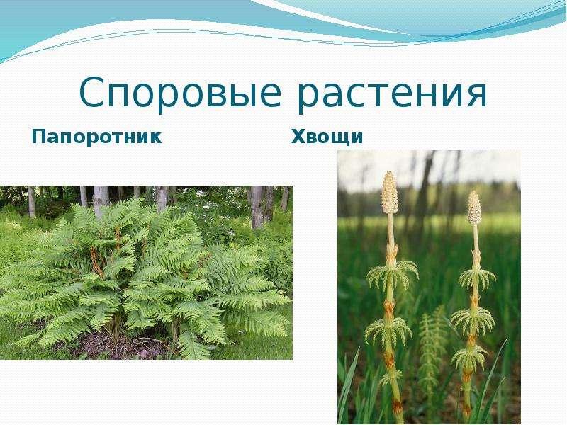 сообщила девушка, споровые растения примеры растений фото касается как