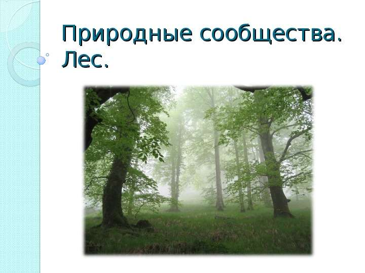 Природные сообщества. Лес.