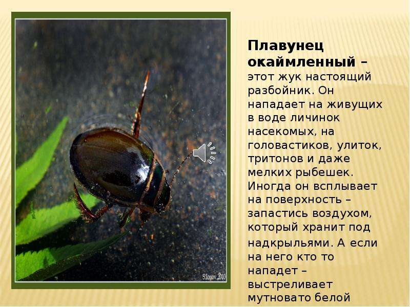 Содержание жуков в домашних условиях