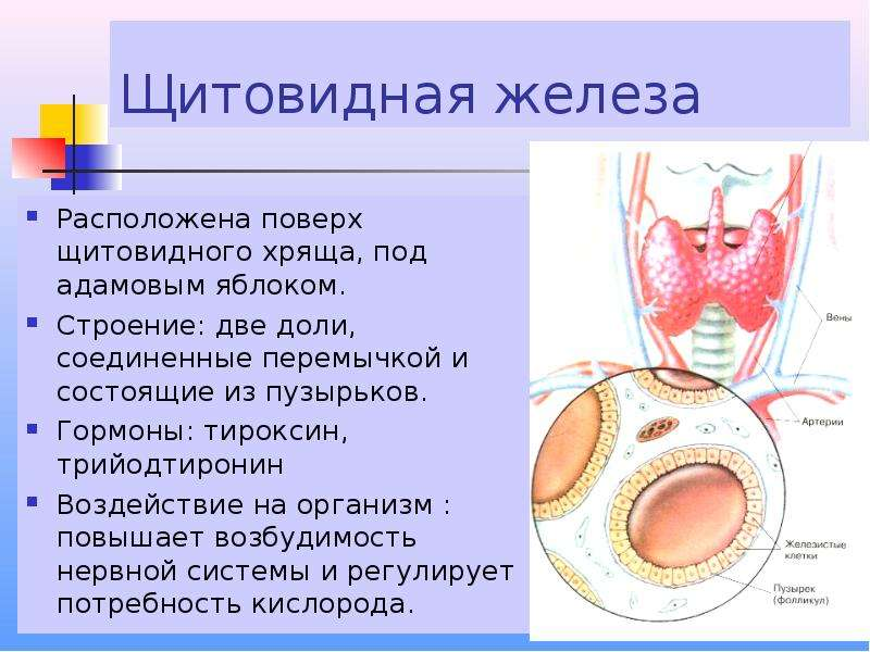 video-bolshaya-zhopa-zhenshini