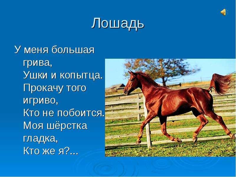 Рассказ с картинками лошадей