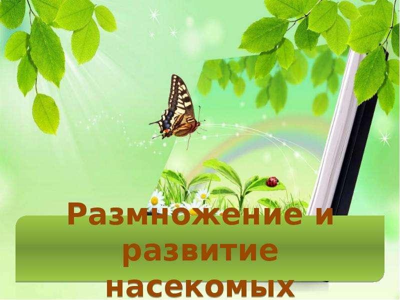 Насекомые Общая характеристика Выполнила: Отряскина Т. А. Неклюдовская сош, слайд 21