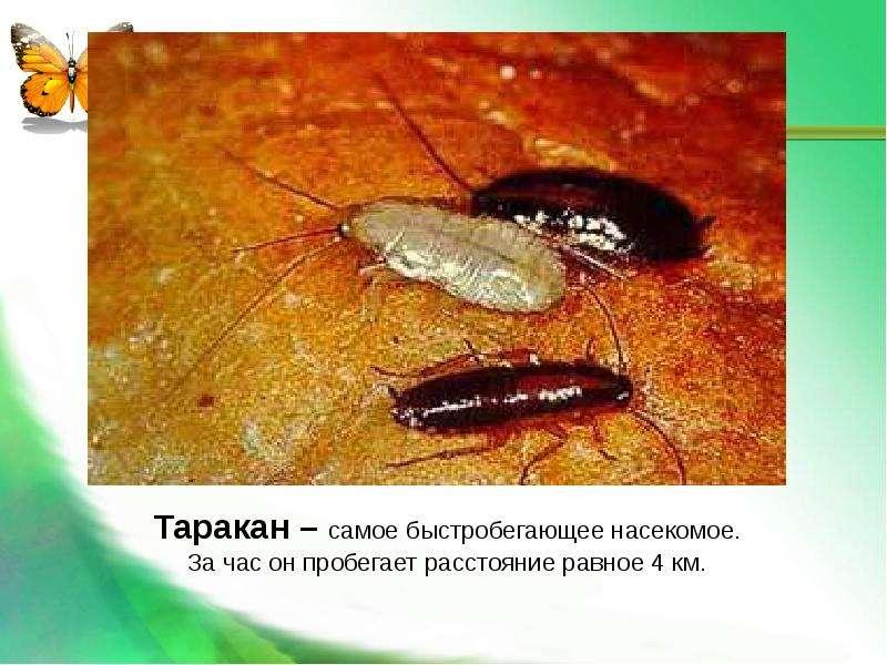 Насекомые Общая характеристика Выполнила: Отряскина Т. А. Неклюдовская сош, слайд 27