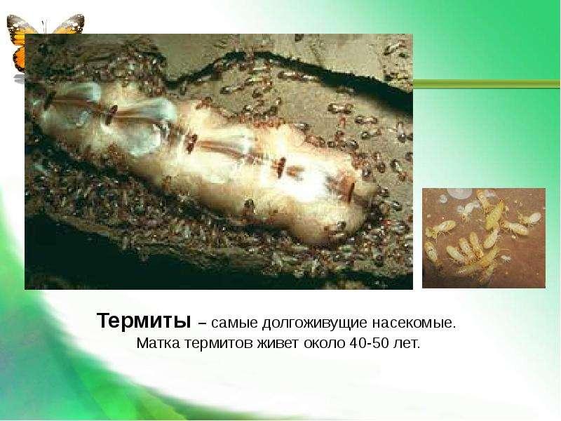 Насекомые Общая характеристика Выполнила: Отряскина Т. А. Неклюдовская сош, слайд 30