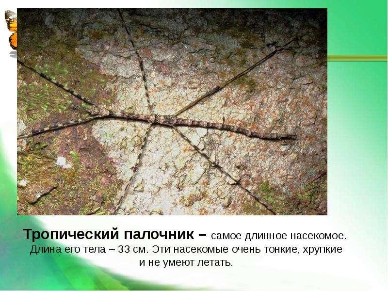 Насекомые Общая характеристика Выполнила: Отряскина Т. А. Неклюдовская сош, слайд 31