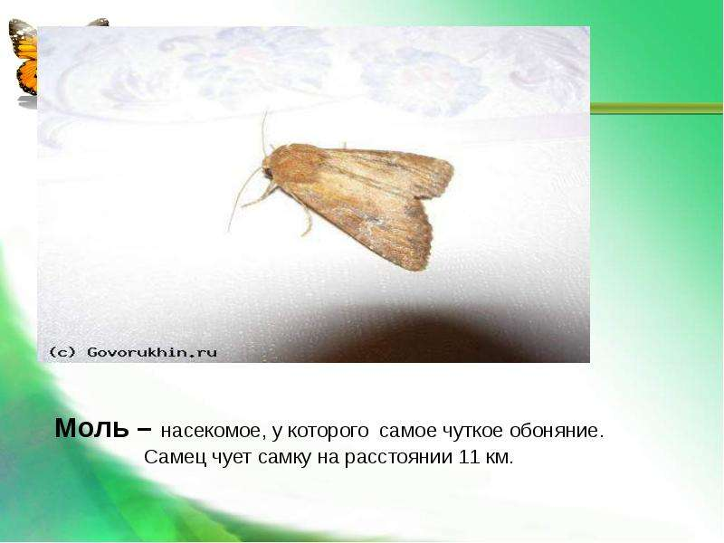 Насекомые Общая характеристика Выполнила: Отряскина Т. А. Неклюдовская сош, слайд 32