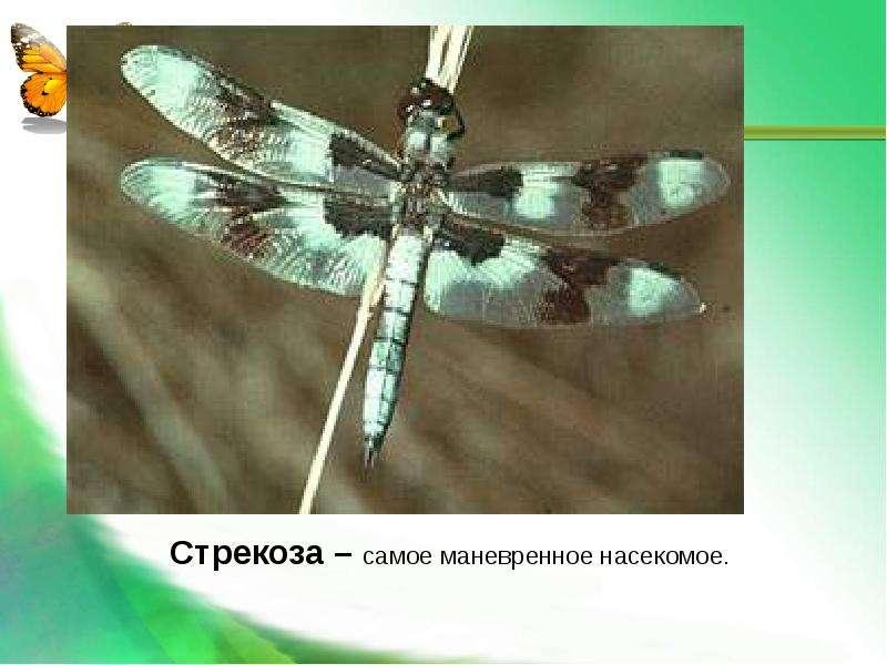 Насекомые Общая характеристика Выполнила: Отряскина Т. А. Неклюдовская сош, слайд 34
