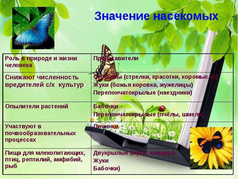 Насекомые Общая характеристика Выполнила: Отряскина Т. А. Неклюдовская сош, слайд 35