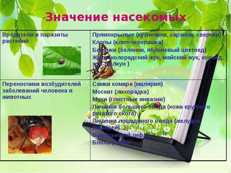 Насекомые Общая характеристика Выполнила: Отряскина Т. А. Неклюдовская сош, слайд 36