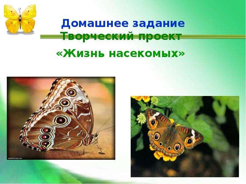 Домашнее задание Творческий проект «Жизнь насекомых»