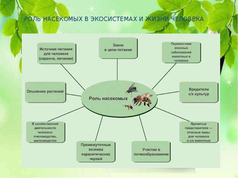 Насекомые Общая характеристика Выполнила: Отряскина Т. А. Неклюдовская сош, слайд 6