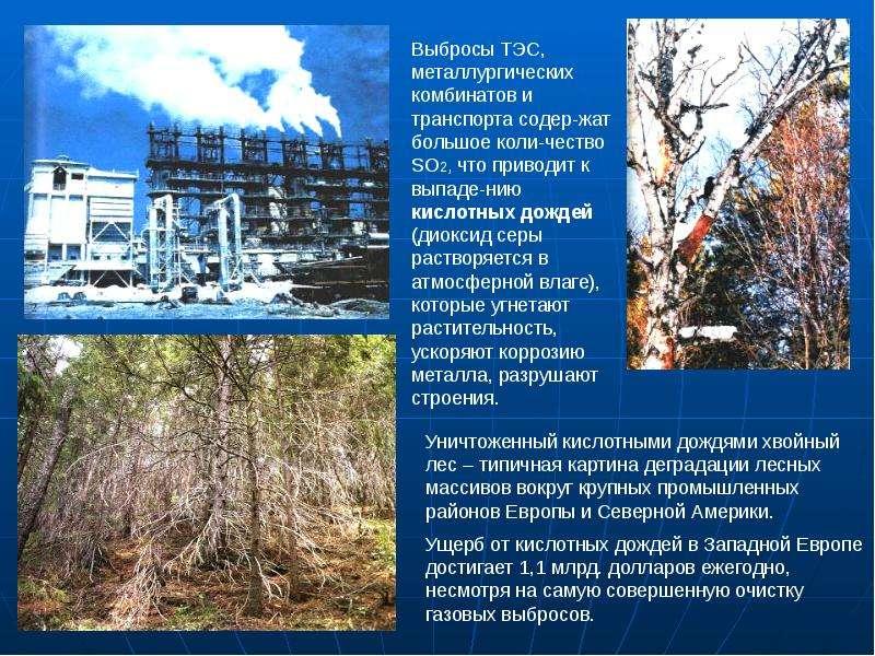 Деятельность человека и глобальные экологические проблемы, слайд 20