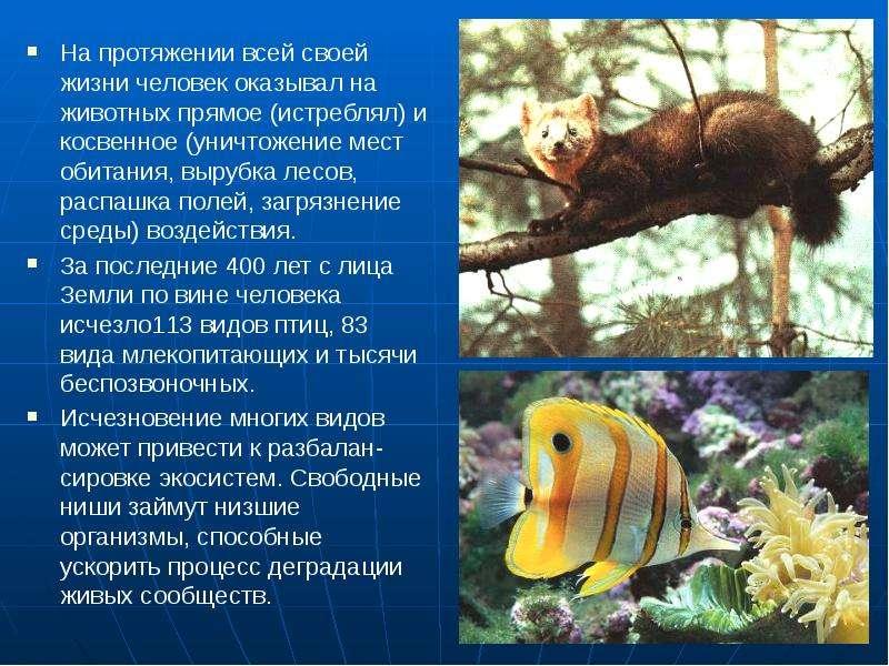 На протяжении всей своей жизни человек оказывал на животных прямое (истреблял) и косвенное (уничтоже