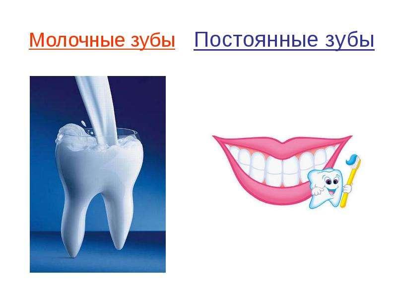 Мне удалили зуб перевод на английский
