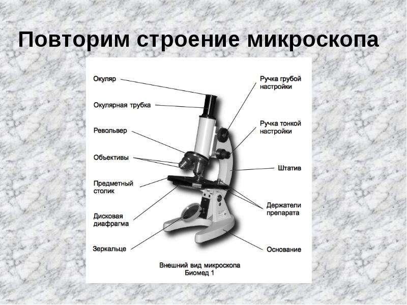 крепления револьвер в микроскопе определение посуточно
