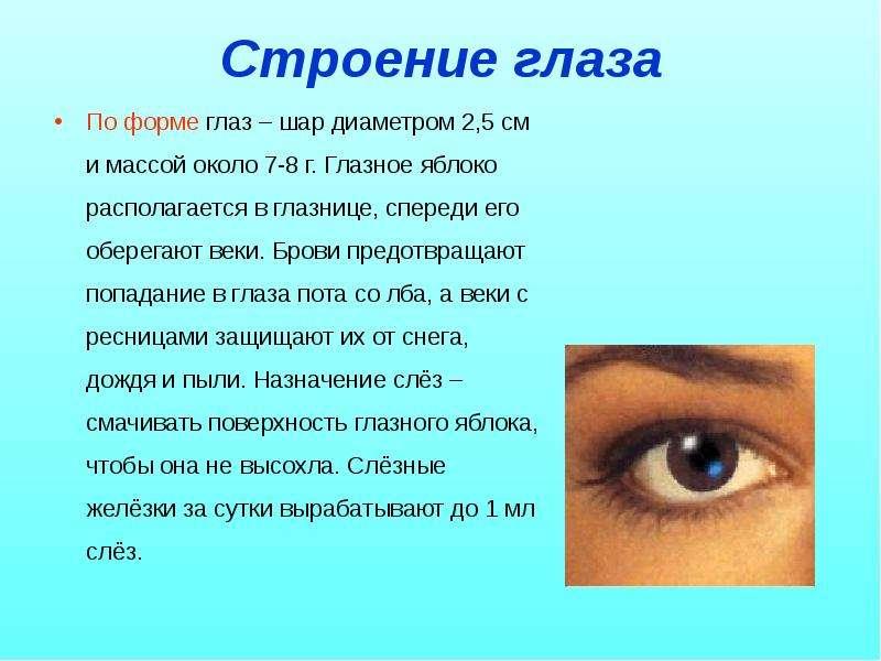 Строение глаза По форме глаз – шар диаметром 2,5 см и массой около 7-8 г. Глазное яблоко располагает