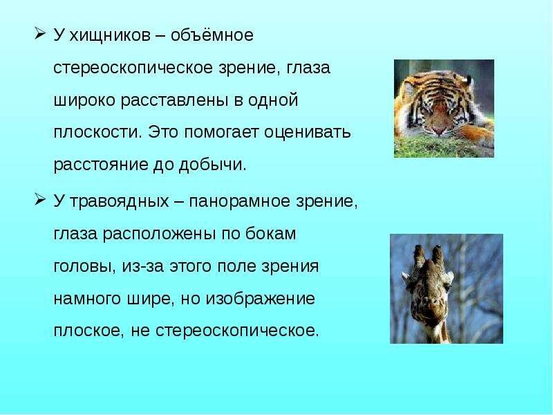 У хищников – объёмное стереоскопическое зрение, глаза широко расставлены в одной плоскости. Это помо